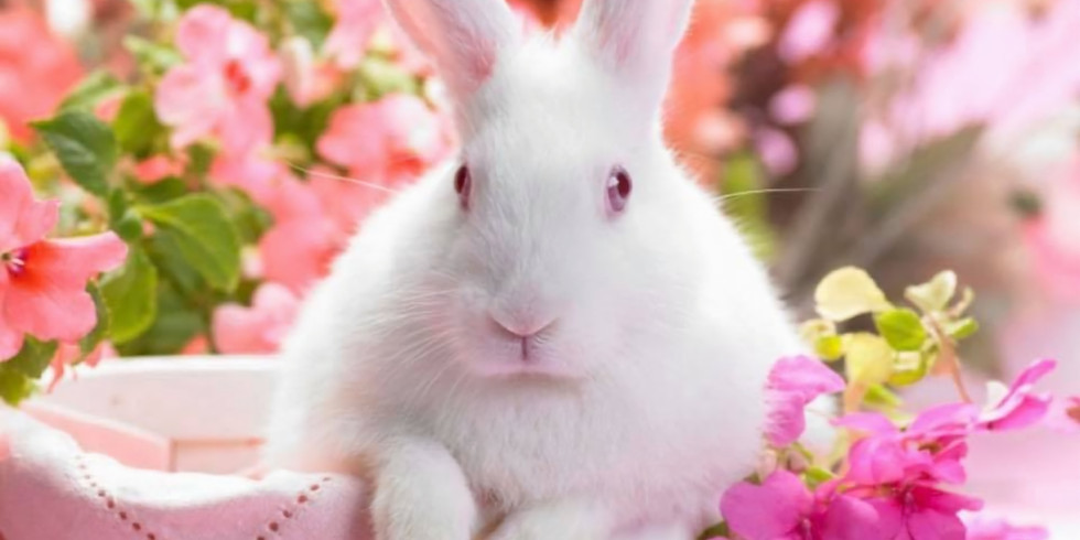 Un-Easter Bunny Romp & Spa/Nail Trim with Spring Photo Booth - Sunday