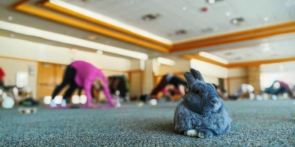 RRMN Bunny Yoga