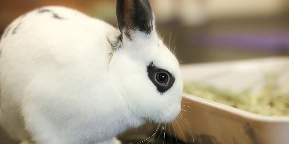 Romp & Spa Bunny/Nail Trim Event