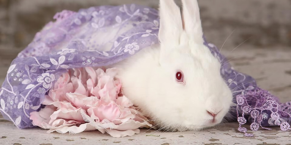 Bunny Meet & Greet and Nail Trim Event