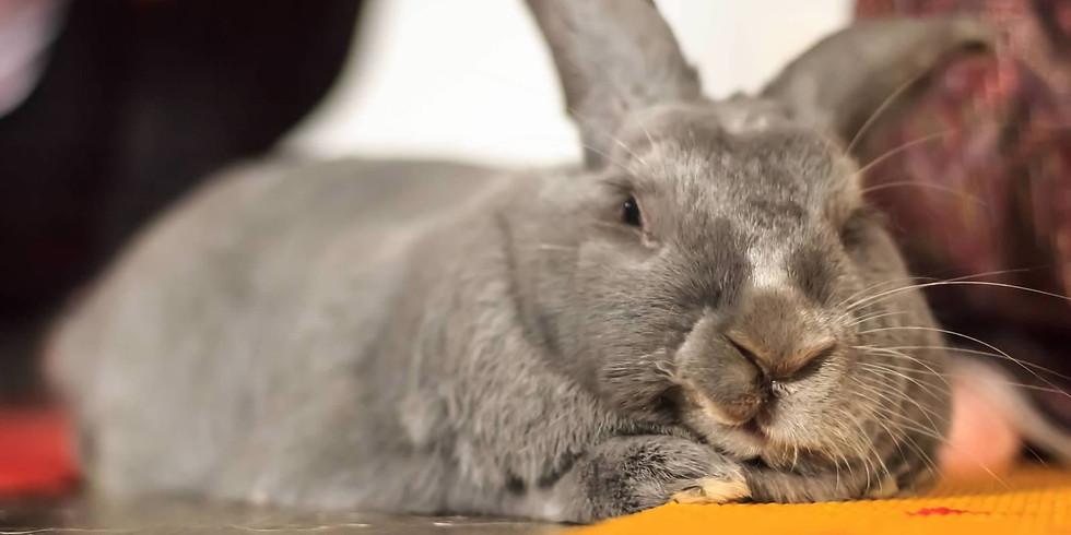 Rabbit Rescue of MN Bunny Meet & Greet - PetSmart Eden Prairie