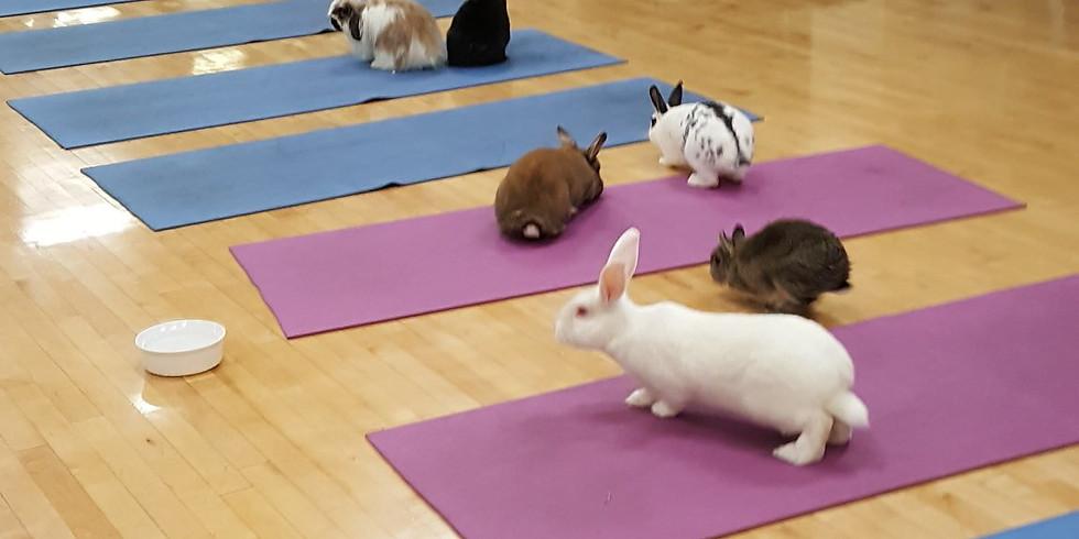 Bunny Yoga Mpls!