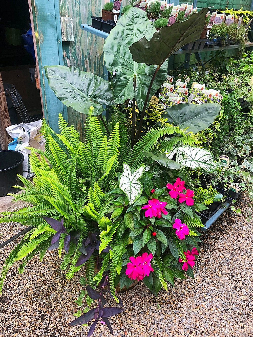 A container garden with ferns at A Growing Concern garden center