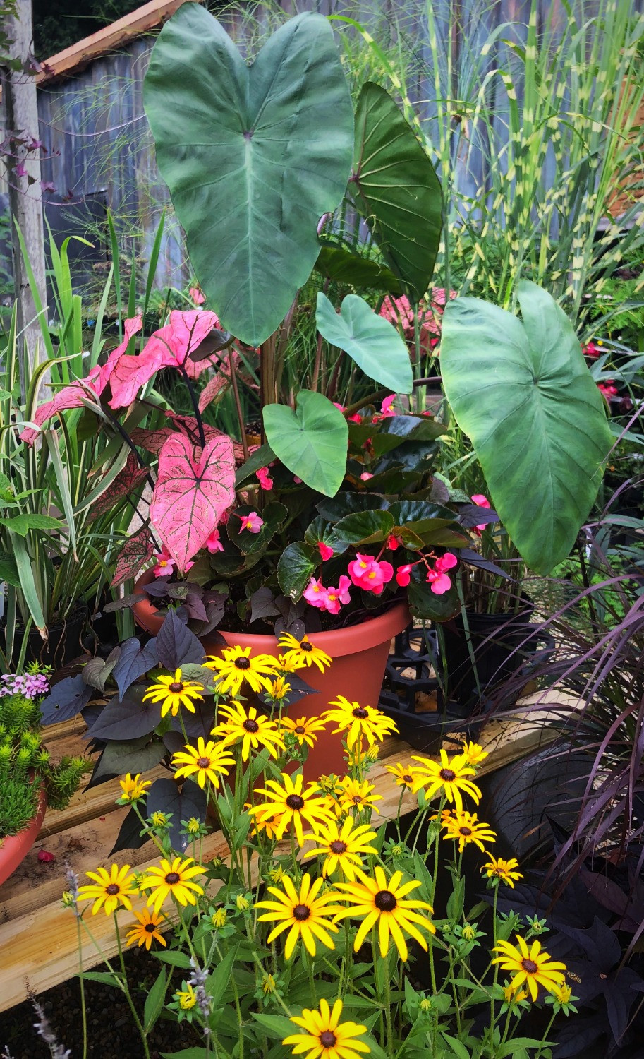 Colorful container garden at A Growing Concern garden center in Hendersonville