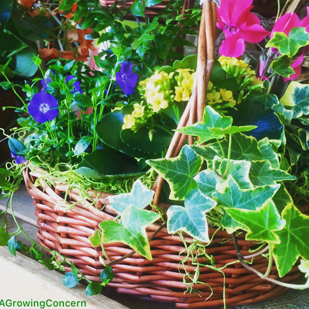 Colorful garden basket for Easter!