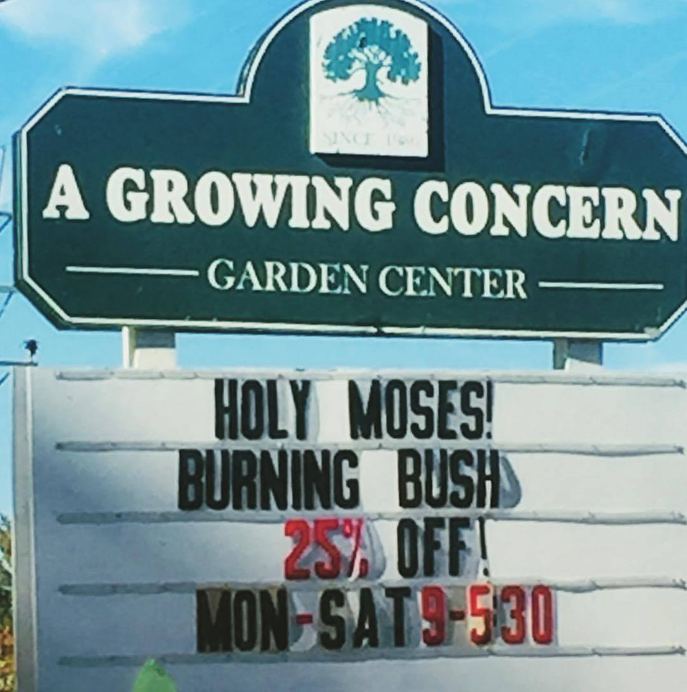 Burning Bush sale in Hendersonville, NC