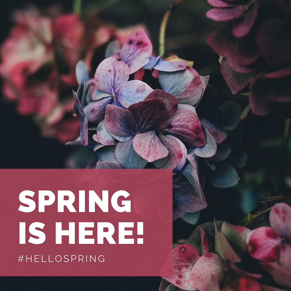 Beautiful spring flowers in Hendersonville, NC