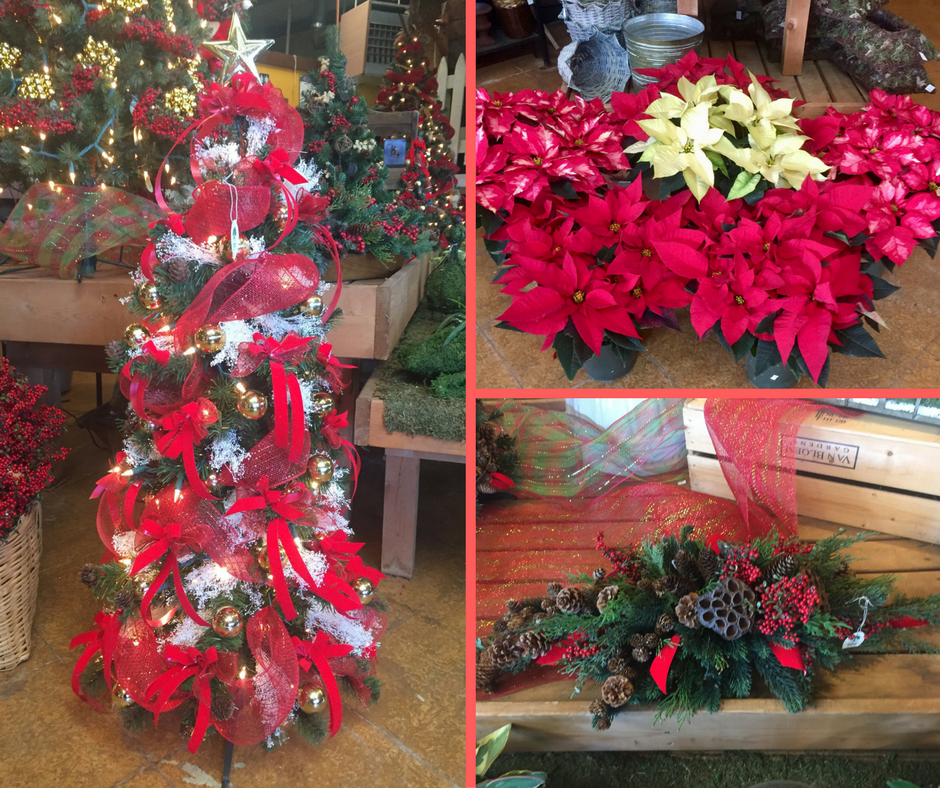 Christmas tree, poinsettias, and Christmas centerpiece at A Growing Concern Garden Center in Hendersonville