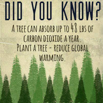 Value of a Tree for Earth Day. Photo credit to Alt National Park Service.