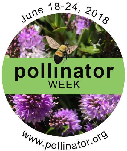 Pollinator Week at A Growing Concern in Hendersonville