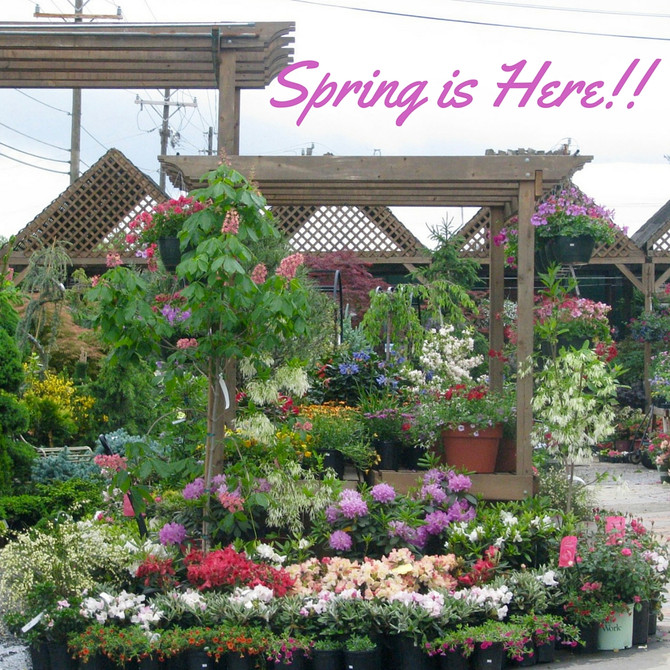 Spring has Arrived!!