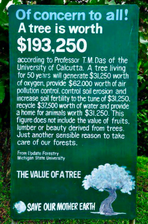 The value of trees for Earth Day in Hendersonville, NC