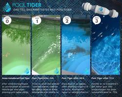 Pool Tiger 72h test