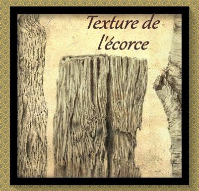 La texture de l'écorce