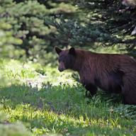 레이니어에서 만난 곰