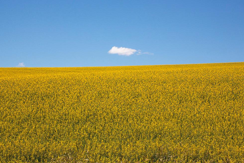 스텝토의 봄 (Steptoe Butte State Park)