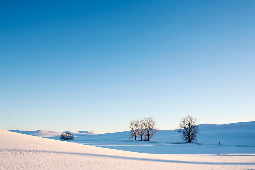 겨울 Steptoe