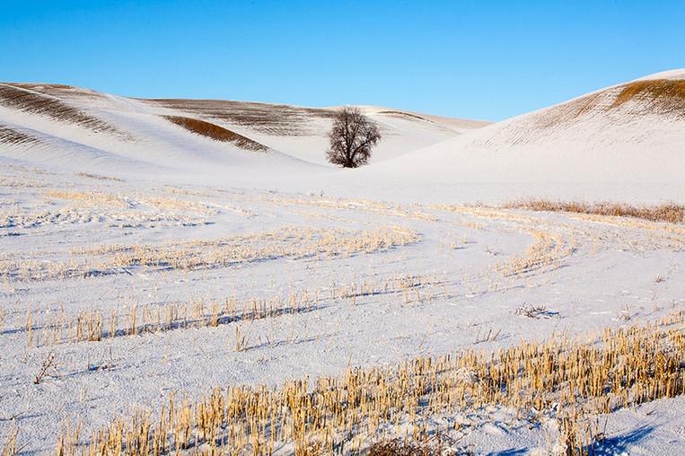 스텝토 겨울