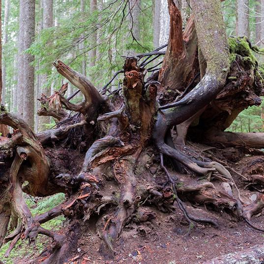 롱마이어 숲길