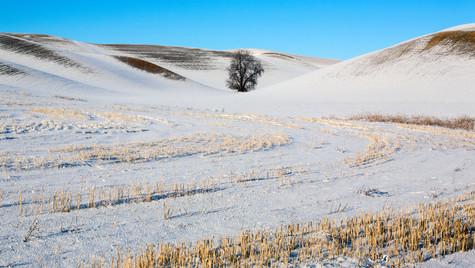 스텝토 겨울.jpg