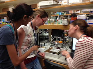 Teaching at the CSHL Neurobiology of Drosophila course