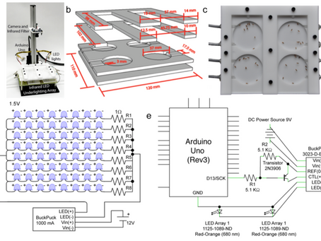 Automated real-time quantification of group locomotor activity in Drosophila melanogaster
