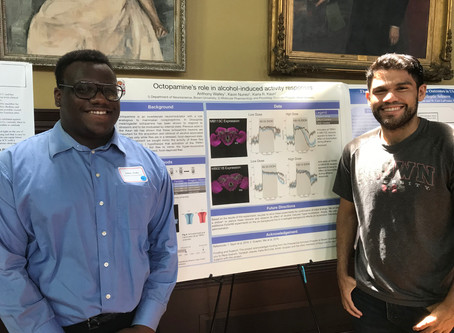 Summer undergrads present their posters