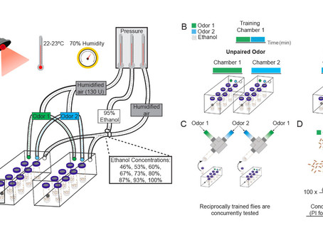 Cue-induced ethanol seeking paper is published!