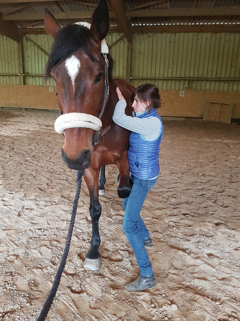 Test de la scapula d'un cheval