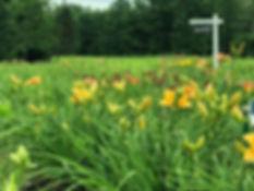 Field pic.jpg