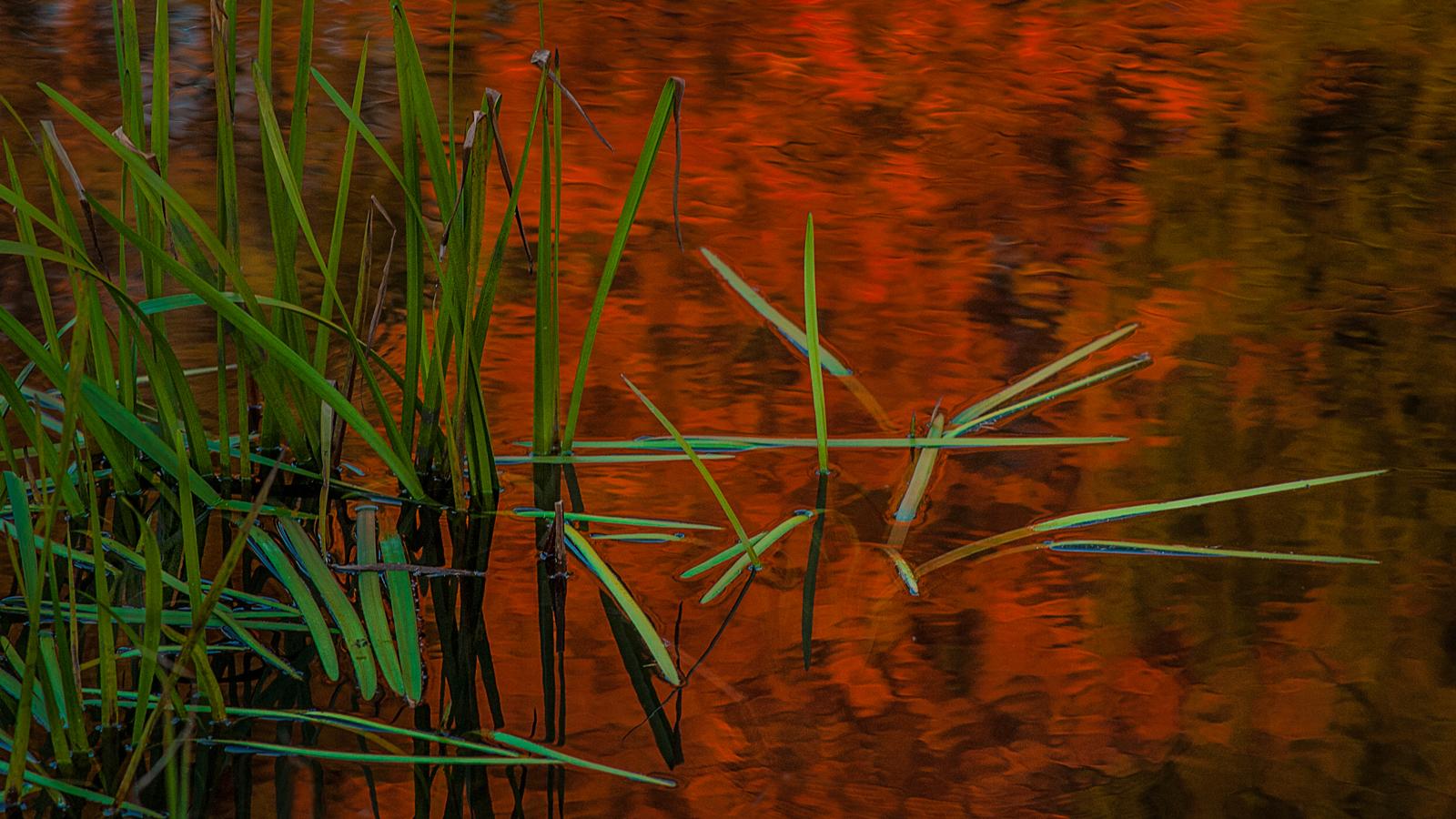 Duke Pottery pond grass