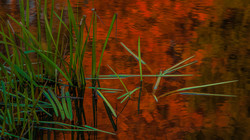 Duke Pottery pond grass