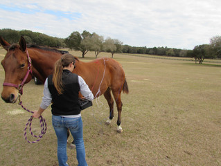 Is Acupuncture What Your Horse is Missing?