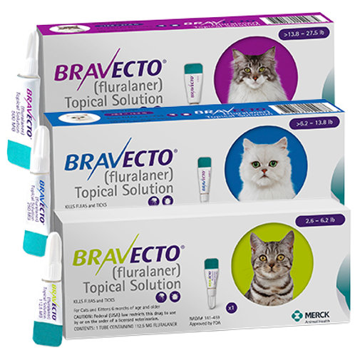 Bravecto Topical for Cats (Single Application)