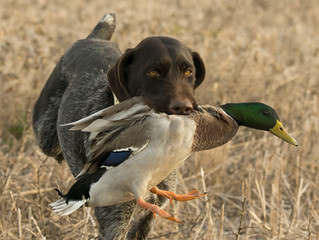 #spinelove for the hunting dog