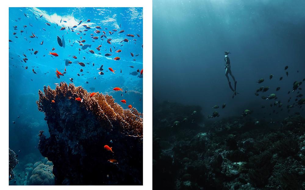 《Edition Fifty Fathomas》(《五十噚特刊》)攝影集中精彩的水下攝影作品。(Photo/Blancpain)