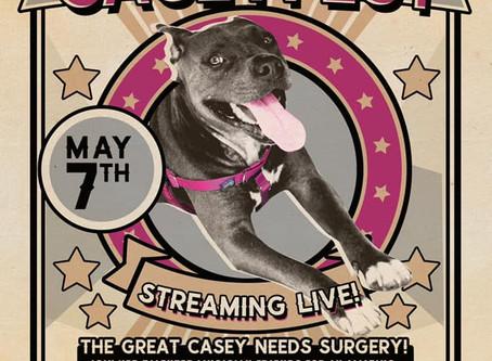 Join us for Caseyfest!