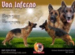 Oargos Fergie Breeding Flyer.jpg