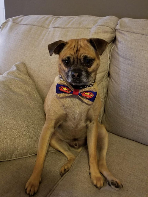 Holiday Pet Bow Ties and More