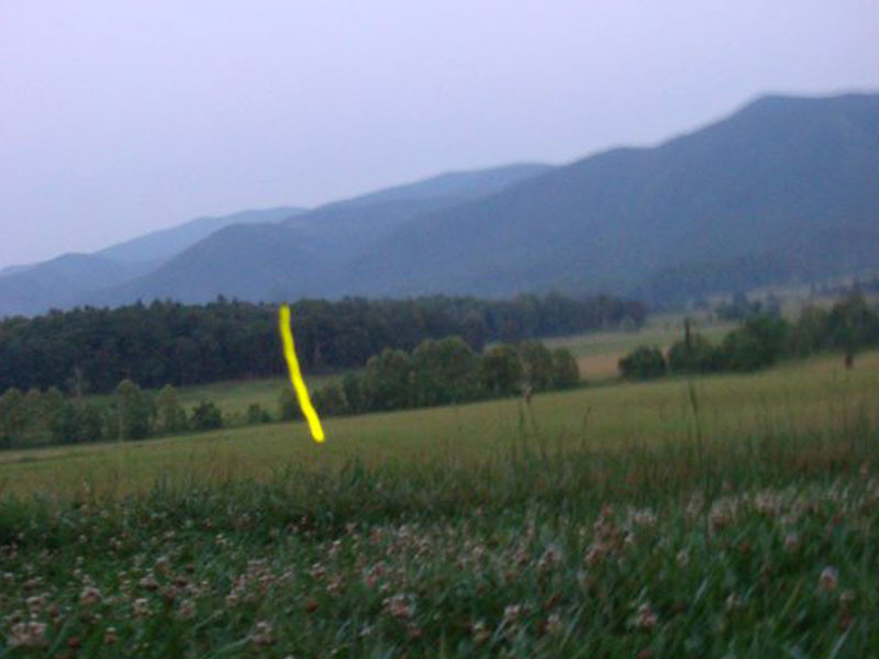 Flash trail of Photinus pyralis - Smoky Mountains expedition - with Prof. Sara Lewis & Lynn Faust