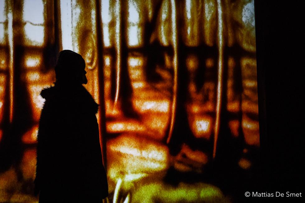 Halewyn in the woods - shadowplay