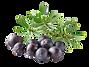 kisspng-gin-juniper-berry-oil-distilled-