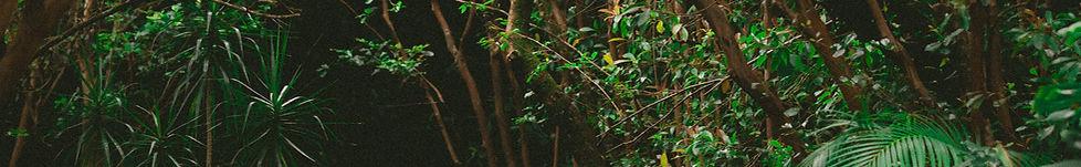 Woods içine