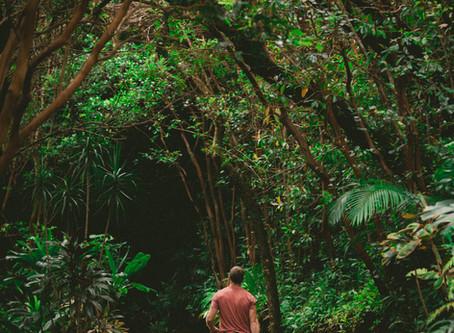 Qu'est-ce qu'un Naturopathe ?