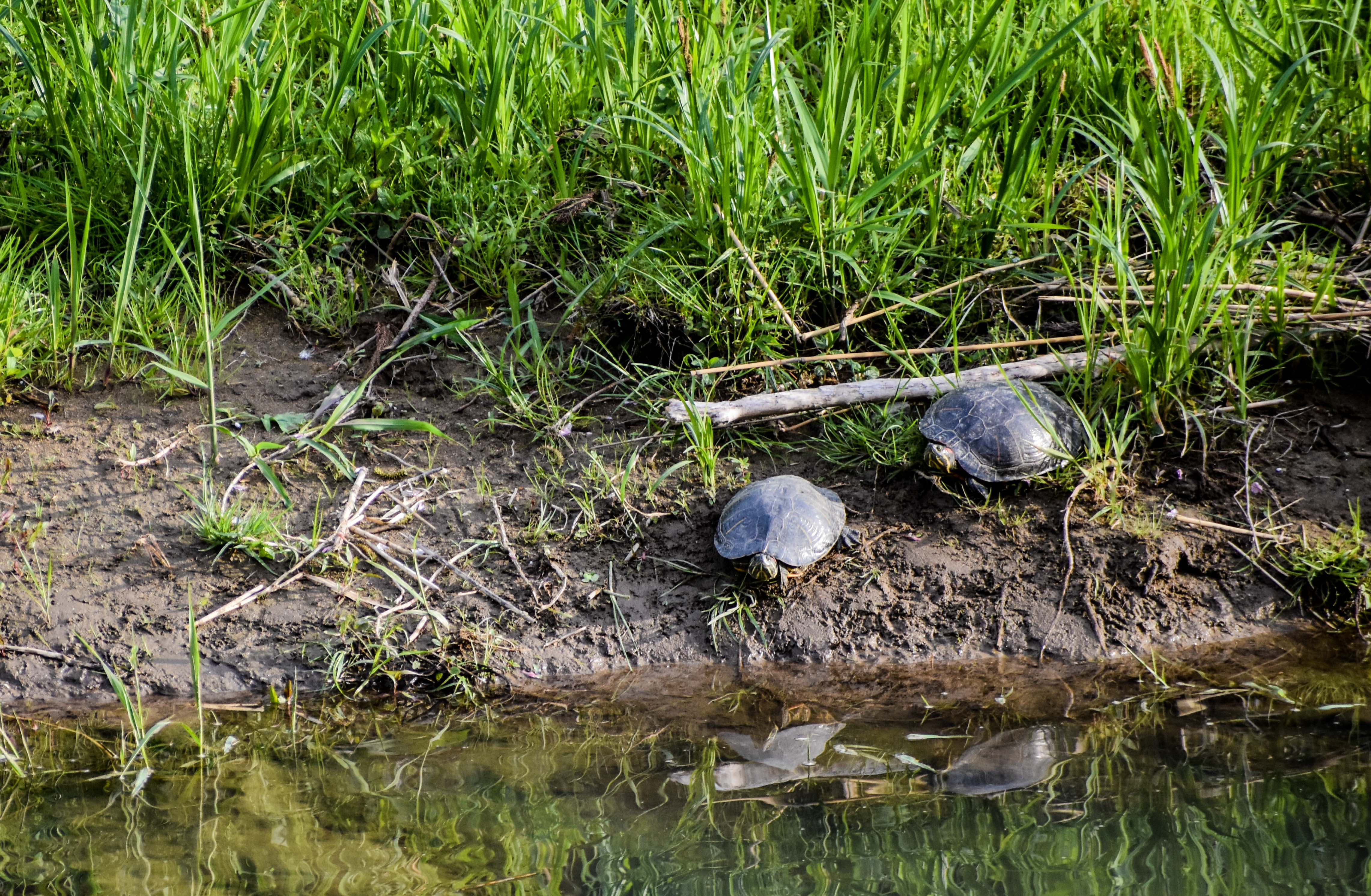 tortugas yeah-4