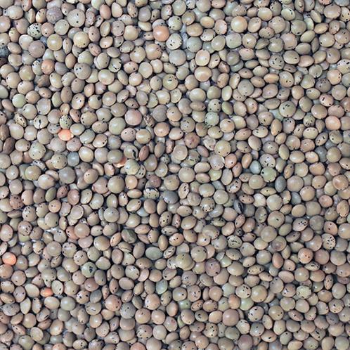 Organic Brown Lentils (Per 100g)