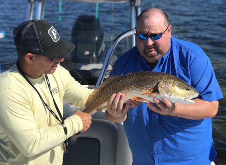 November Is A Tampa Bay Fishing Guides Dream Month
