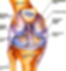 Арьков Владимир Владимирович реабилитолог, реабилитолог, реабилитация, врач реабилитолог, лфк, спортивная медицина, реабилитация на Курской, реабилитация после артроскопии, восстановительная медицина, лечебная физкультура, кинезиотейпирование,  лечебная гимнастика, спортивный врач, арьков рф, дистанционное лечение после операций
