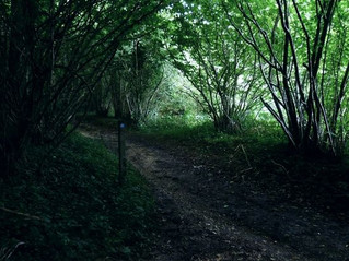 Clapham Wood: The chilling Sussex woodland where bodies were discovered, UFOs seen & pets disappear