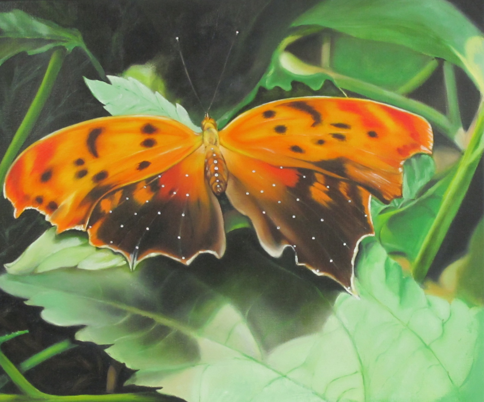 'Bronze Copper Butterfly'